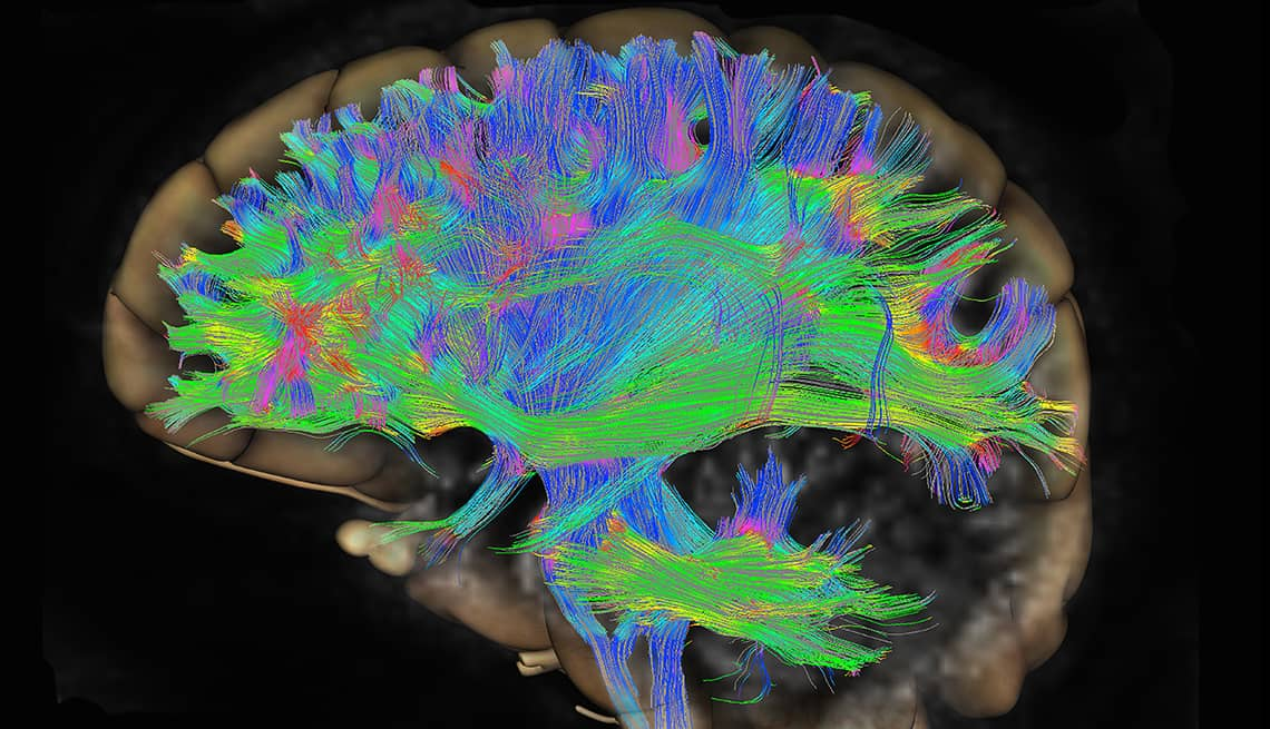 Older Adult Brains Can Grow Thousands of New Cells